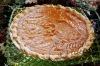 The best sweet potato pie---hands down!